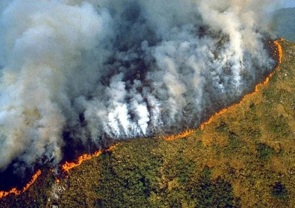 The Amazon rainforest is burning at record levels
